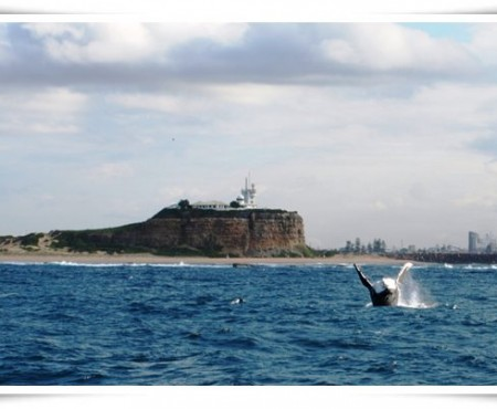 Whale Watching Cruise- Newcastle Social Trip